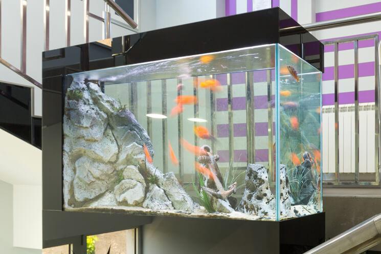 100 Gallon Aquarium In An Office