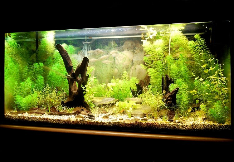100 Gallon Fish Tank Guide Stocking Ideas, Setup and More… Cover