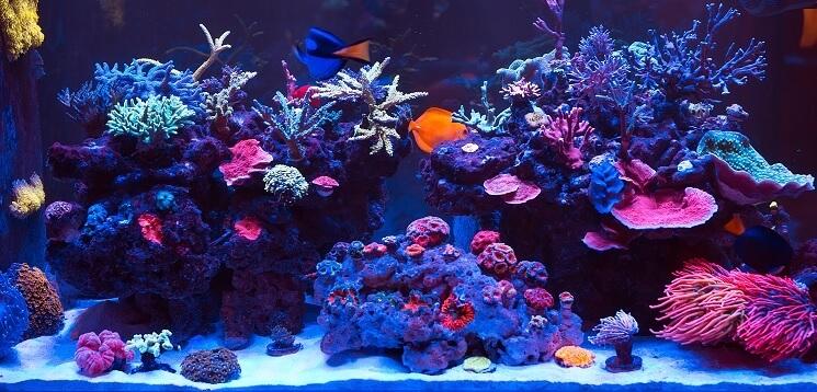 100 Gallon Tank Coral Reef