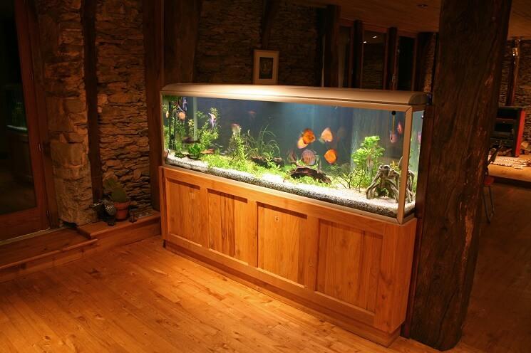A 100 Gallon Fish Tank