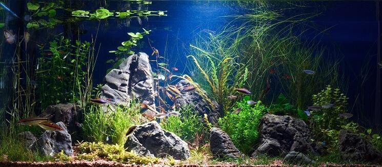 Freshwater Tank For Ember Tetras