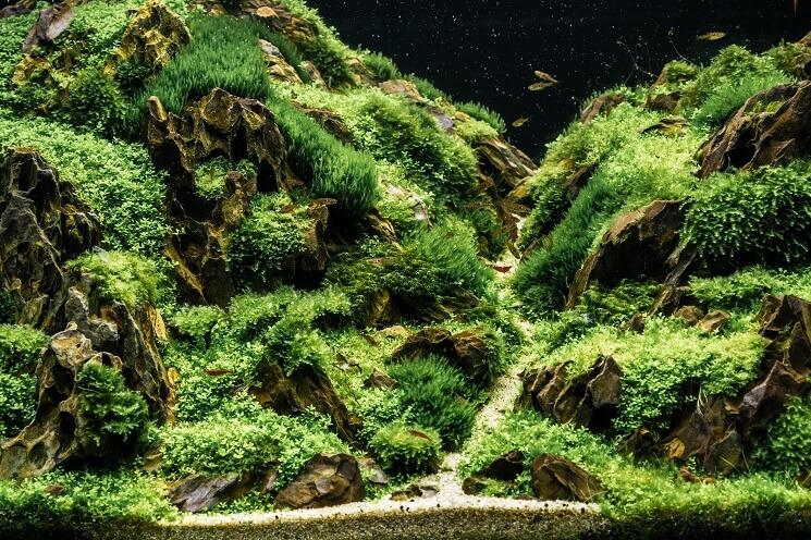Java Moss Tank