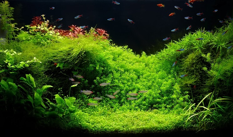 Planting Java Moss