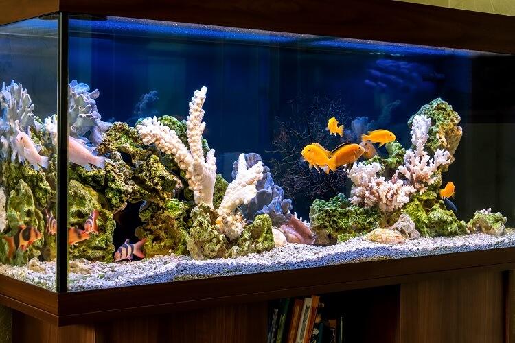 75 Gallon Aquarium Guide Size, Stocking Ideas and More Cover