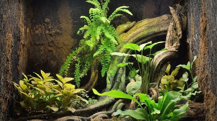 75 Gallon Aquarium Plants
