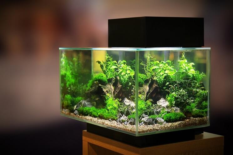 A 40 Gallon Fish Tank