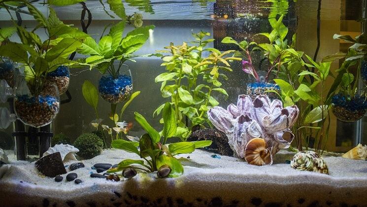 A Stocked 40 Gallon Fish Tank