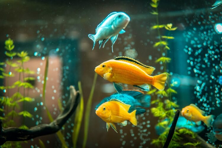 Top 25 Most Popular Freshwater Fish For Beginners Cover