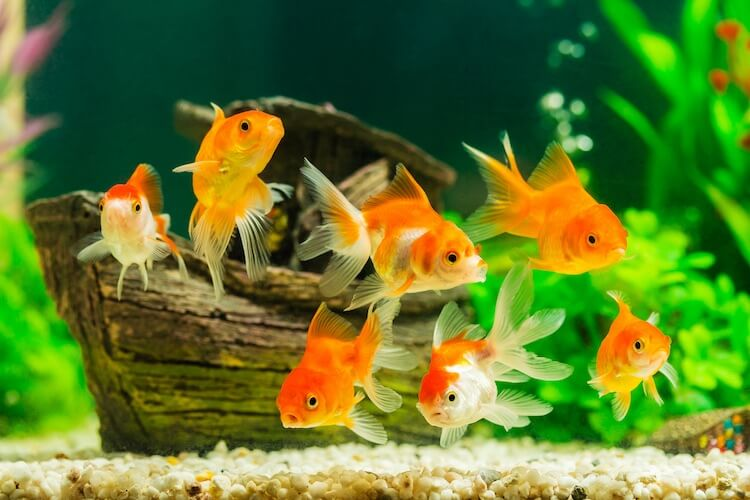 How To Cycle A Fish Tank The Complete Beginner's Guide Cover
