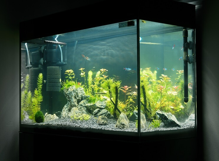 How to Cycle a Fish Tank