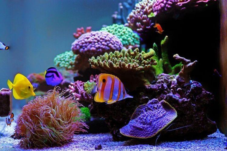 Top 21 Most Popular Saltwater Aquarium Fish Cover