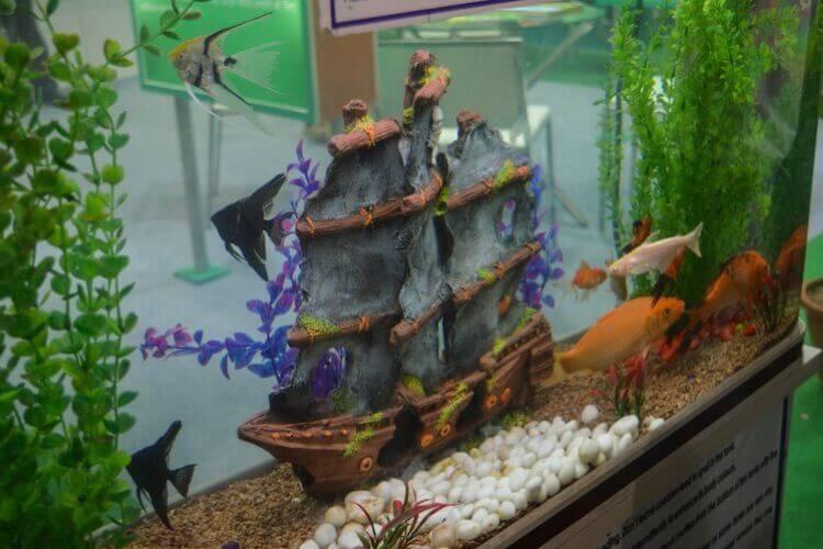 125 Gallon Aquarium Guide Stocking Ideas, Size and More
