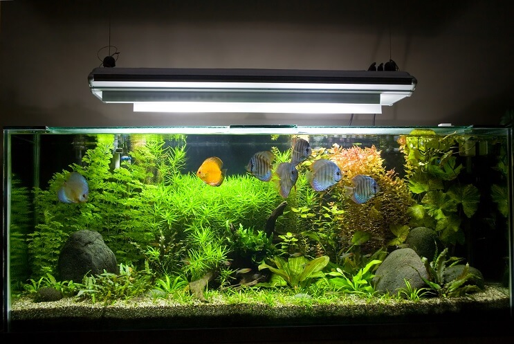 Discus Species Only Tank