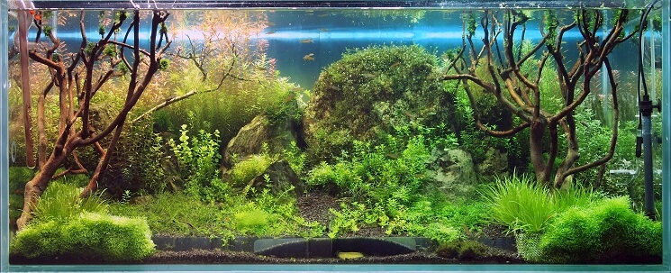 A Planted Tank With Dwarf Hairgrass