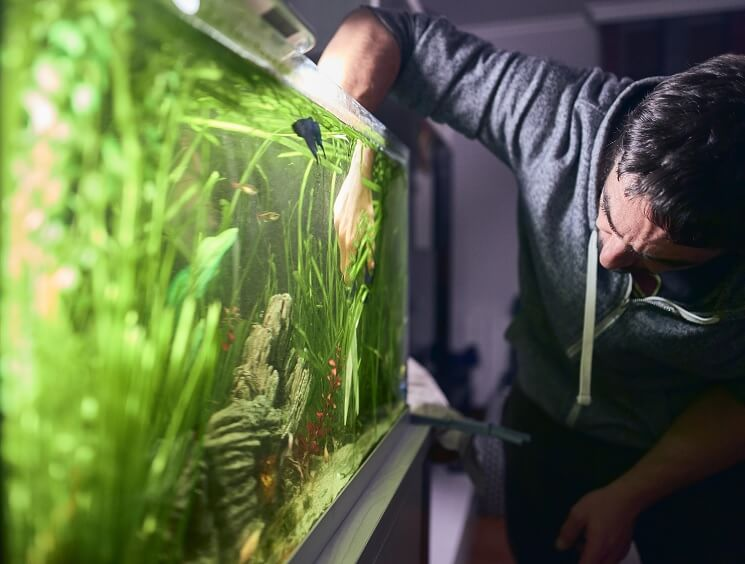 Cleaning Fish Tank