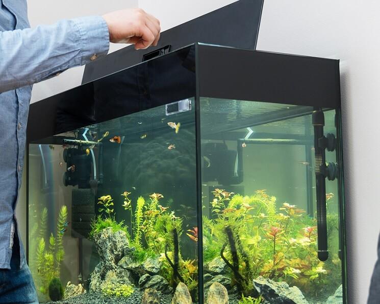 Feeding Fish In A 30 Gallon Tank
