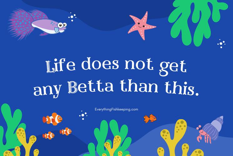 Betta Fish Pun