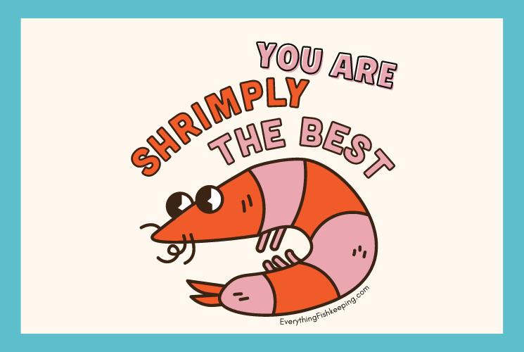 Shrimp Pun