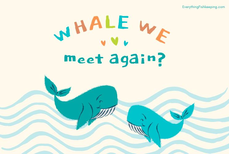Whale Pun